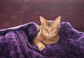 Чистота — залог здоровья: кошка научилась мыть полы и передает навыки котятам