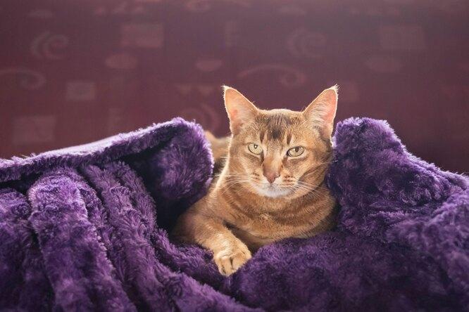 Чистота — залог здоровья: кошка научилась мыть полы ипередает навыки котятам