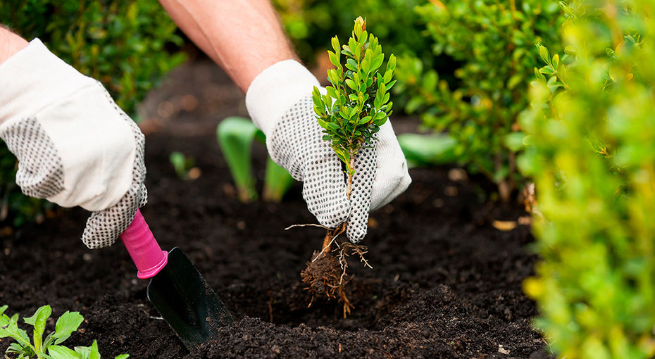 Удобрения, газонокосилка иеще 7 товаров длясада иогорода