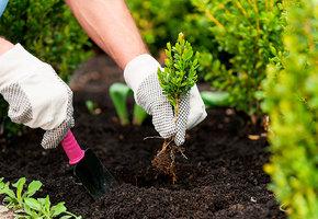 Удобрения, газонокосилка и еще 7 товаров для сада и огорода
