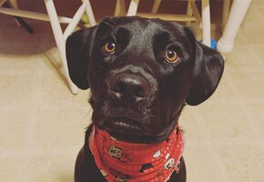 Приютский пес боялся ветеринаров. И тогда врач решил ему спеть