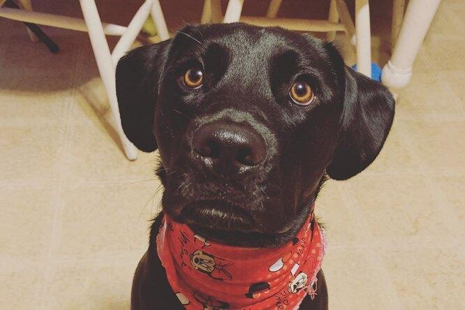 Приютский пес боялся ветеринаров. Итогда врач решил ему спеть
