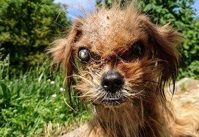 Умирающего щенка подобрали на улице восемь месяцев назад. Вот что сделали с ним любовь и забота