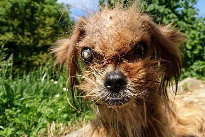 Умирающего щенка подобрали наулице. Вот что сделали сним любовь изабота