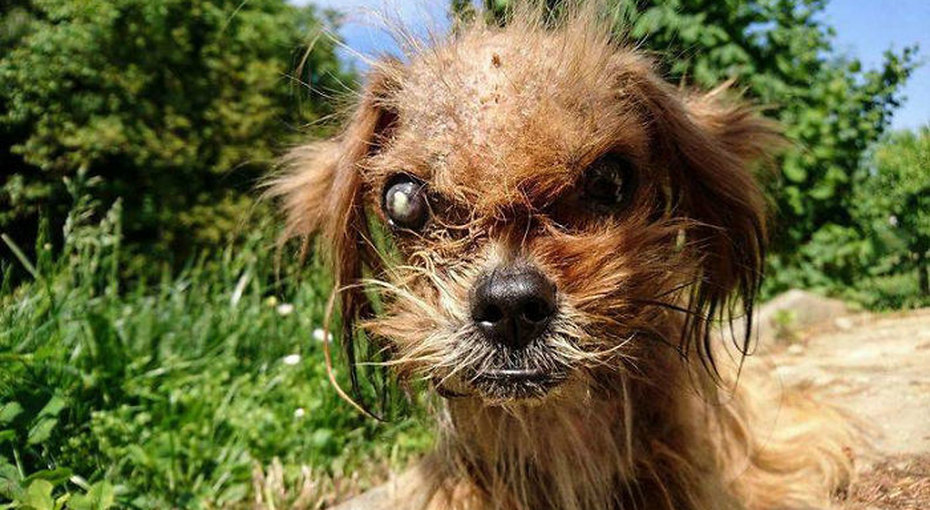 Умирающего щенка подобрали наулице восемь месяцев назад. Вот что сделали сним любовь изабота