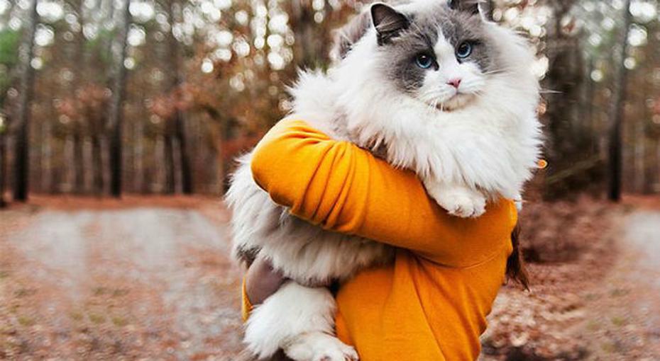Самые пушистые кошки 2015 года