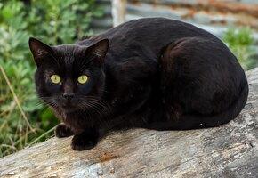 «Дети счастливы»: чёрная кошка вернулась домой через четыре года после пропажи