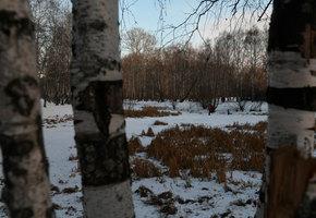 Родители 9-летнего мальчика, найденного мертвым в лесополосе Екатеринбурга, состояли в секте