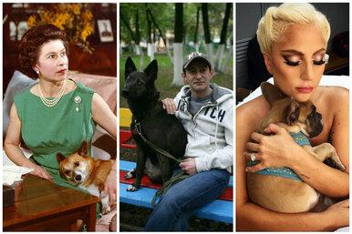 Звезды иих собаки. Кто приносит тапочки знаменитостям