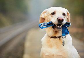 Благотворительной акцией отметят Всемирный день бездомных животных в МЕГЕ Теплый Стан