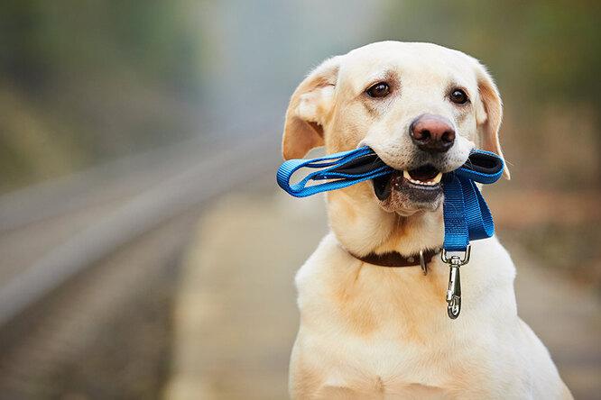 Благотворительной акцией отметят Всемирный день бездомных животных вМЕГЕ Теплый Стан