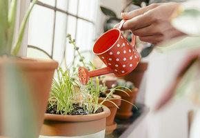 Ароматы дома: 8 душистых растений, которые можно вырастить в горшке