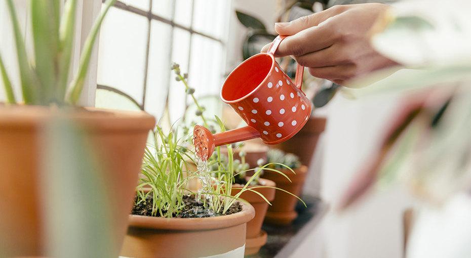Ароматы дома: 8 душистых растений, которые можно вырастить вгоршке