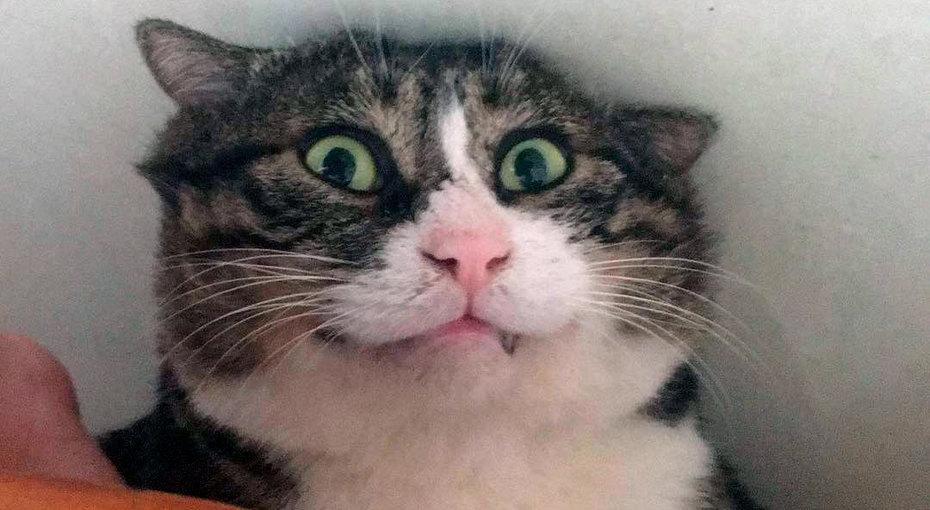 Король драмы! ВКитае живет кот сочень активной мимикой