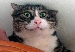 Король драмы! В Китае живет кот с очень активной мимикой