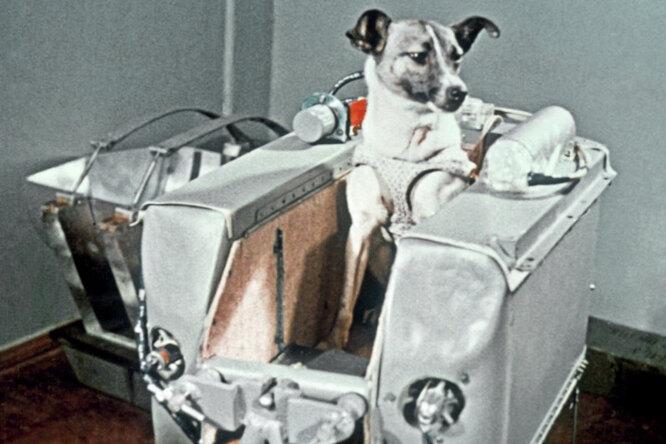 У Хрущева небыло собаки. Почему Лайку отправили вкосмос наверную смерть