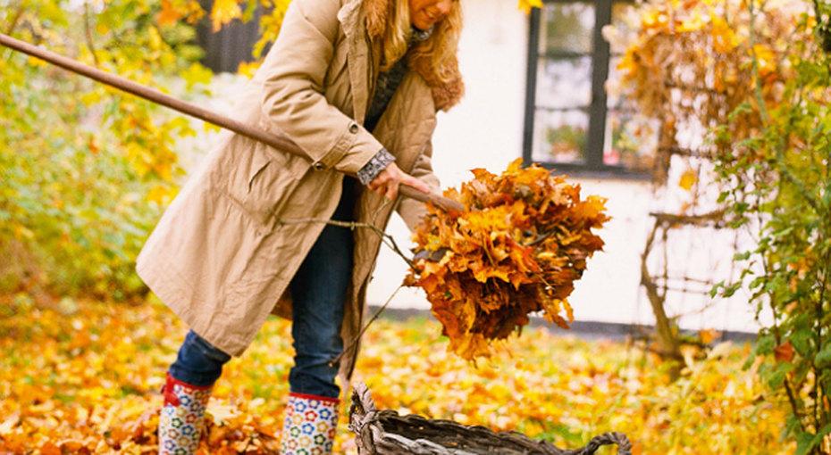 10 дел, которыми нужно заняться вцветнике доморозов
