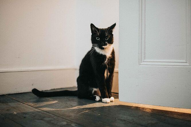 Ночной дозор: как отучить кошек бегать, когда вы спите