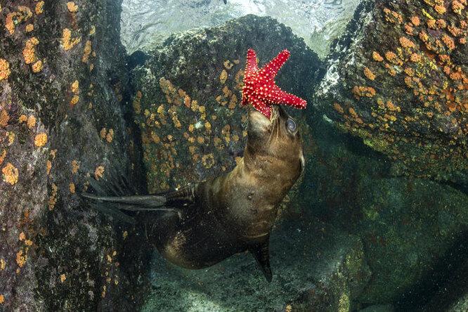 Группа морских львов сначала напугала дайверов, а потом устроила шоу