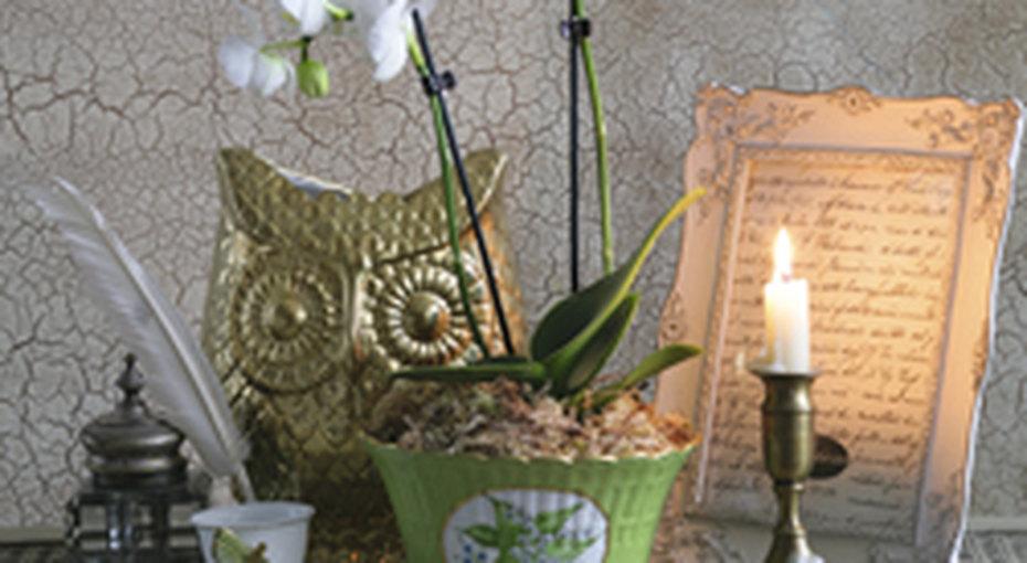 Растения винтерьере квартиры