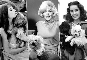 Звездные питомцы: собаки и кошки великих людей