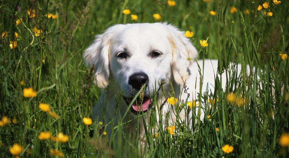 «Скажите «А»: как правильно почистить зубы собаке - изачем это вообще делать