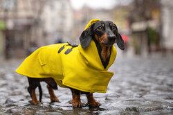 Нужна ли собакам тёплая одежда?