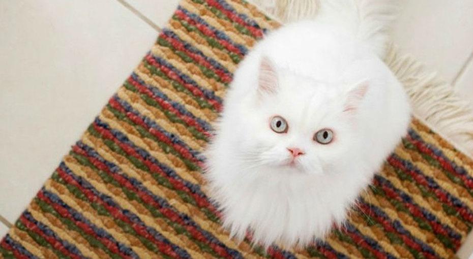 Как удалить пятна отмочи домашних животных сковров идругих поверхностей