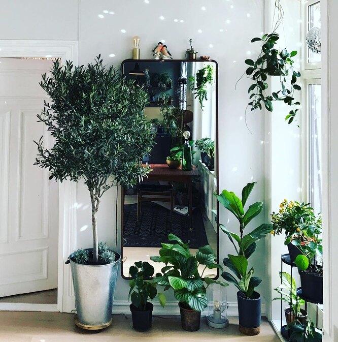 Оливковые деревья/Тренды 2020