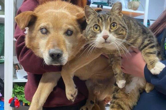 Слепой пес немог обходиться безповодыря-кота. Изприюта они уехали вместе