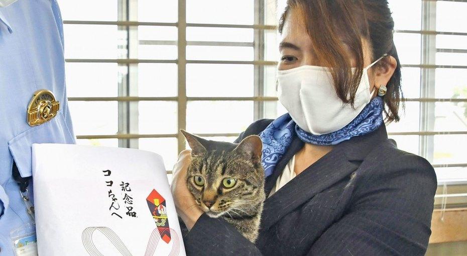 Кошка удостоена полицейских почестей заспасение человека