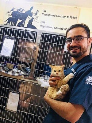 кошка салли, солдат и котенок, защита животных афганистан