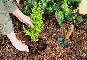 За забор и под деревья: 7 неприхотливых растений, которые вырастут в любом месте