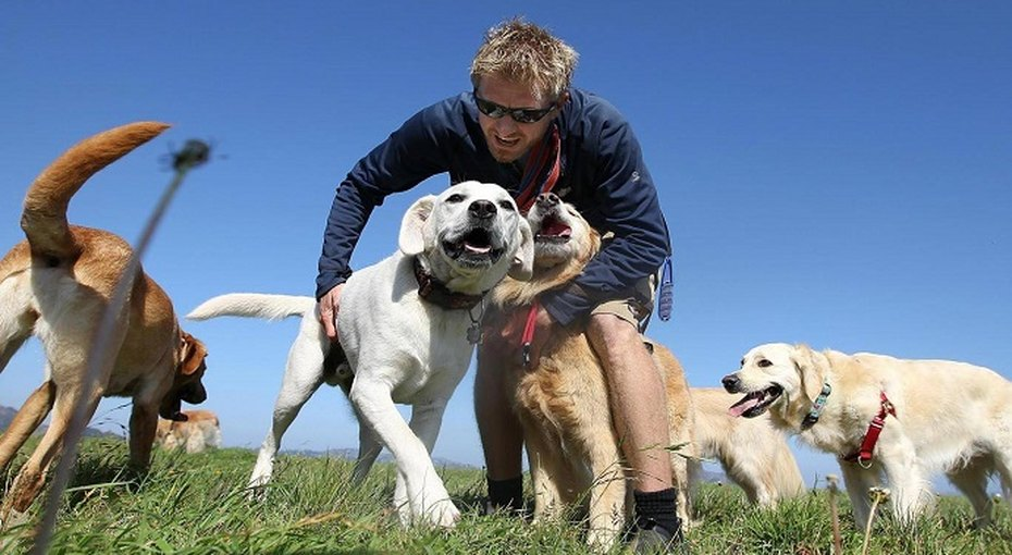 Ученые узнали, как далеко может завести вас любимая собака