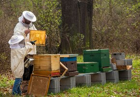 Правильные пчелы: увлечение помогло бывшему военному вновь найти смысл жизни