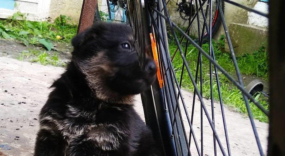 Водитель, задавивший щенка, требует компенсацию с16-летнего владельца, ударившего покапоту