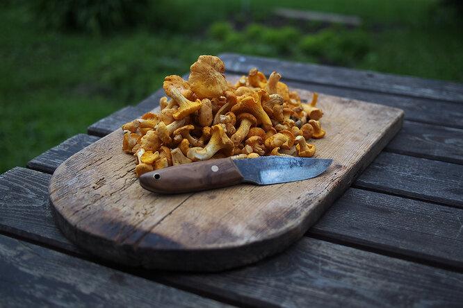 Правила сбора и варки грибов: советы грибникам