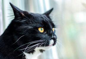 «Сторожевая» кошка яростно защищает дом от почтальона (видео)
