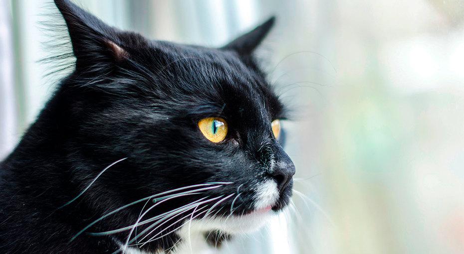 «Сторожевая» кошка яростно защищает дом отпочтальона (видео)